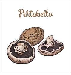 Set of portobello edible mushrooms vector