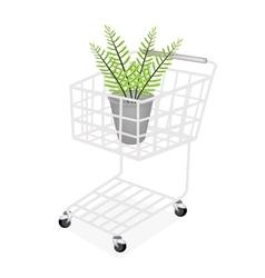 Beautiful Green Fern in A Shopping Cart vector image