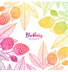 Colorful frame with blackberry healthy vector