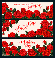 rose flower banner for greeting card or invitation vector image