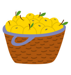 Straw fruit basket with yellow apples image vector