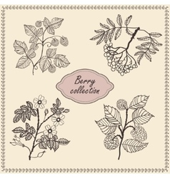 Collection of hand drawn berries vector image