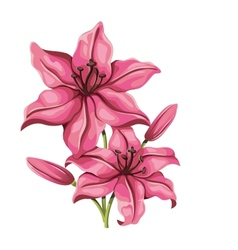 Detailed lily flower in vintage style vector image