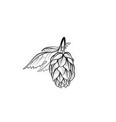 hops bush floral beer icon engraving hand drawn vector image