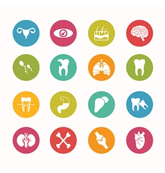 Human anatomy icons set Circle Series - eps10 vector image