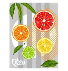Poster with citrus fruits slices Mix of lemon vector image