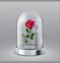 Rose in glass dome isolated beautiful red flower vector