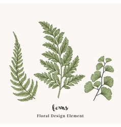 Set with ferns Plants with leaves isolated vector