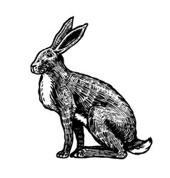 wild hare or brown rabbit sits european bunny or vector image