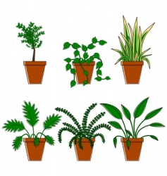 six plants in pots vector image vector image