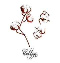 Cotton plant vector image