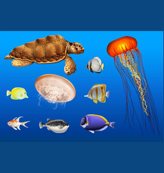 different types of sea animals in ocean vector image