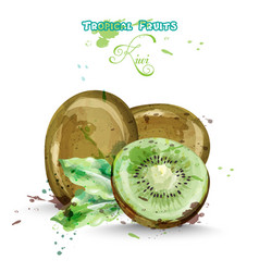 Kiwi fruits watercolor delicious colorful vector