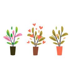 leafy houseplants botanical set vector image