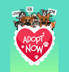Pets for adoption poster vector