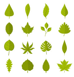 plant leafs icons set in flat style vector image