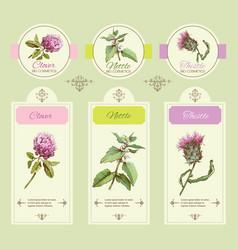 Herbal banner green vector image