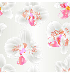 seamless texture orchids phalaenopsis closeup vector image