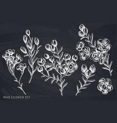 Set hand drawn chalk wax flower vector