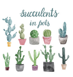 Set of cactus and succulents isolated on white vector