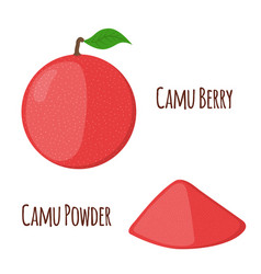 Superfood camu camu in flat style red camu fruit vector