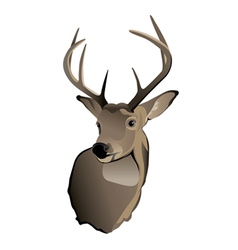 Whitetailed Deer Buck vector image