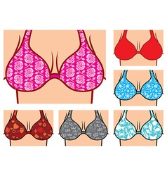 Breasts in bikini vector image vector image