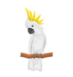 white cockatoo parrot on branch exotic bird with vector image