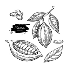 Cocoa superfood drawing set Isolated hand vector image vector image
