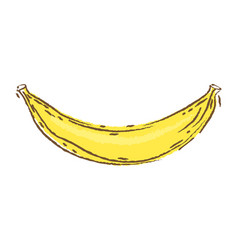 banana sketch and doodle vector image