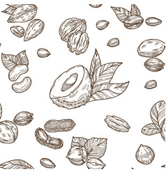 delicious nutritious nuts full of vitamins and vector image