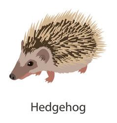 Hedgehog icon isometric style vector