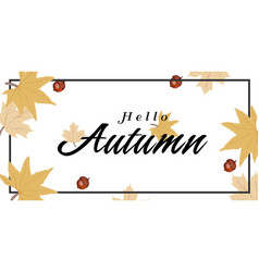 hello autumn maple leaves nut background im vector image