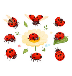 red ladybugs view nature bugs flying summer vector image