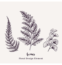 Set with ferns Plants with leaves isolated vector image
