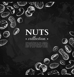 nuts vintage frame hand drawn vector image vector image