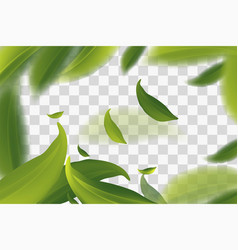 3d with green tea leaves in motion on a vector
