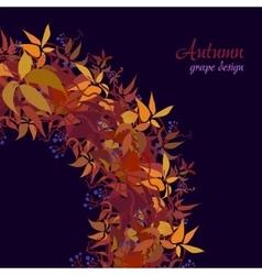 Autumn grape vine vector image