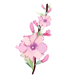 Japanese plum blossom watercolor vector
