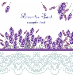 Lavender Card with lace border vector image