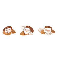 Raw almond nut set in various color almond milk vector
