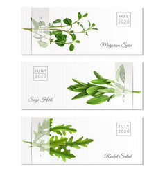 realistic herbs horizontal banners vector image