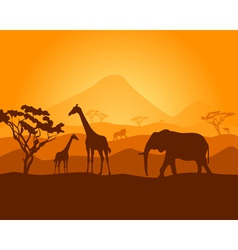 safari vector image