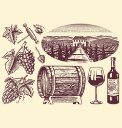 vineyard and wine set grapes and wooden barrel vector image