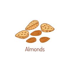 Almond hand drawn vector