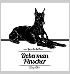Doberman pinscher dog - for t vector