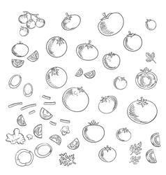 farm tomatoes vegetables sketch icons vector image