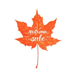 Hand drawn lettering of a phrase Autumn Sale vector image