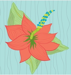 Hibiscus flower on the blue background vector image