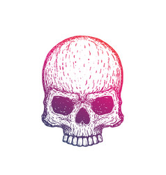 skull hand drawn vector image